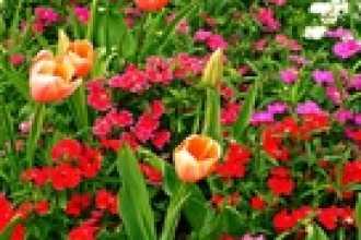 Календарь цветовода на февраль