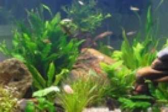 Влияние размера аквариума на размеры рыбок