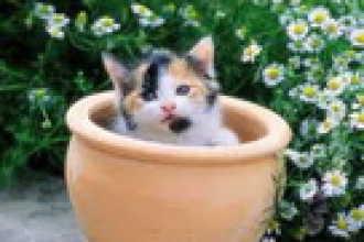 Ядовитые растения опасные для кошек