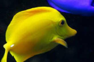 Гороскоп на 2016 год для Рыб
