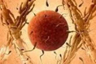 Внутриматочные контрацептивы
