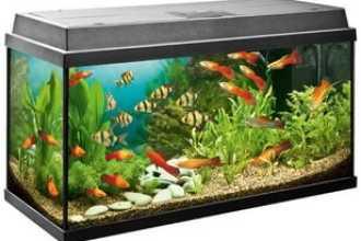 Куда поставить аквариум по фен шуй в квартире: советы и рекомендации