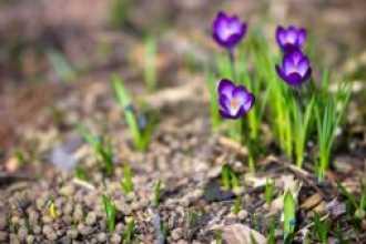 Какие из знаков Зодиака выпадают на апрель-месяц
