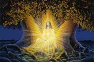 Денежная медитация «Волшебное дерево» — правила работы