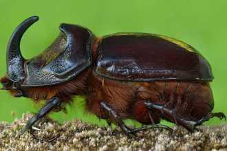 Как понять, к чему снится жук: варианты расшифровки