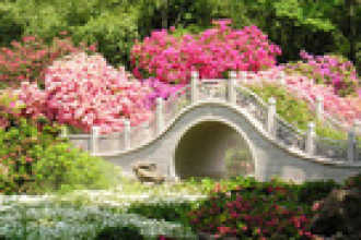 Календарь цветовода на июнь