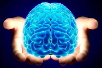 Какое из полушарий мозга у вас больше развито?