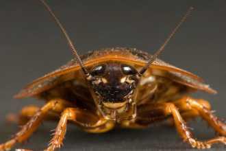 Приснилось что убиваю таракана — что это может означать