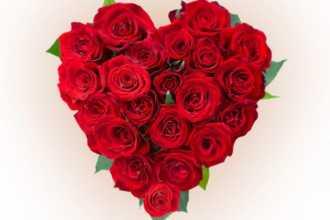 Что означают красные розы по сонникам — нюансы расшифровки