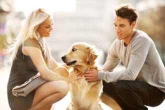 Удачлива ли совместимость в любви между двумя Собаками