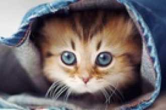 Кошка-талисман для дома