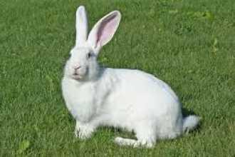 Почему приснился кролик — особенности толкования по сонникам