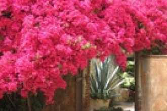 Календарь цветовода на сентябрь