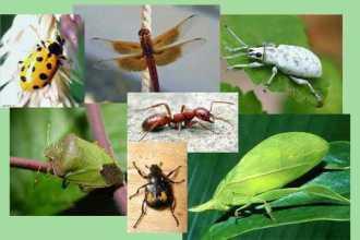Приснились насекомые — как правильно толковать по сонникам