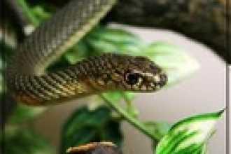 От змей