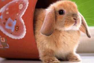 К чему снятся кролики женщине и мужчине?