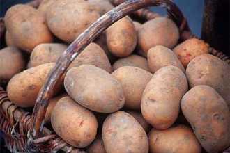 Приснилась крупная картошка – что это означает, версии известных толкователей
