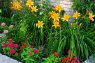 Необычные растения на садовом участке