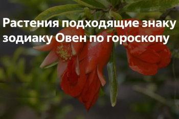 Гороскоп растений для Овна