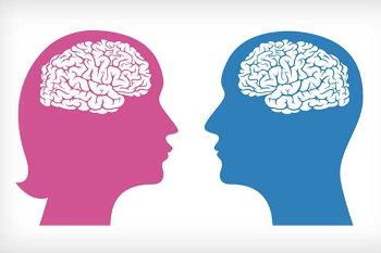 У вас мужской или женский мозг?